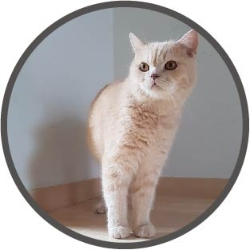 cat in circle_wall_250x250
